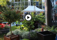 Vidéo – Le salon Délices de Plantes se prépare !