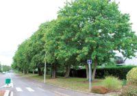 Réunion publique mardi 17 octobre – Plan de gestion de l'arbre 2017/2018