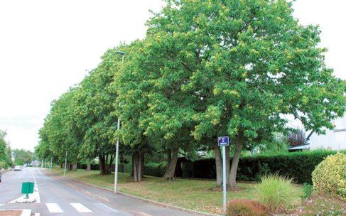 Réunion sur le plan d'élagage des arbres 2018-2019