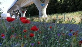 Vidéo – War fait pousser des fleurs sur les piliers du métro à Cesson-Sévigné