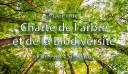 Les arbres à Cesson-Sévigné : participez à l'enquête en ligne