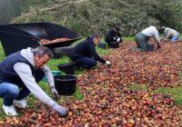 Retour en images sur la cueillette participative des pommes